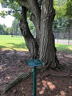 Tree Identification Signs at Grimes Park